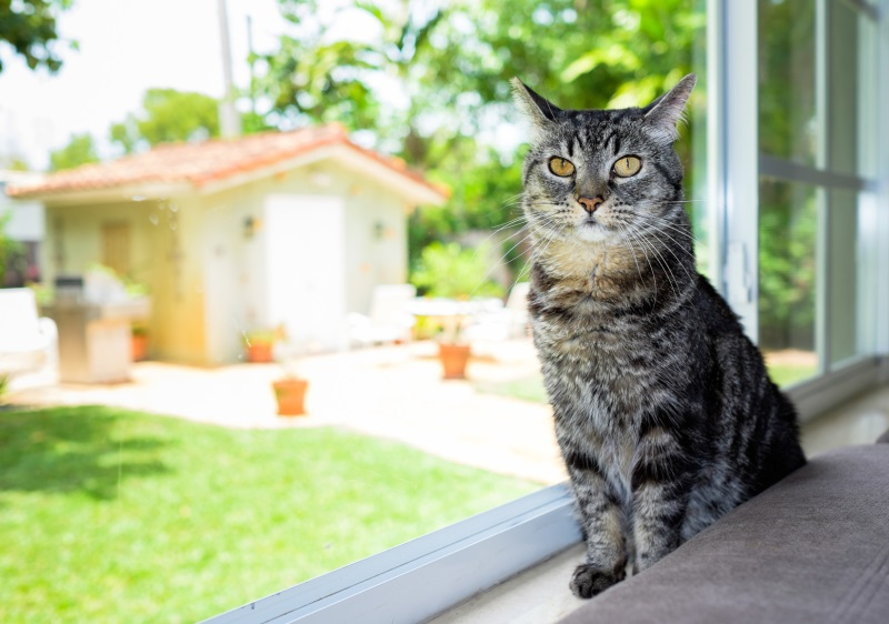 9 Tips On Choosing The Best Cat Boarding Facility For Your Pet