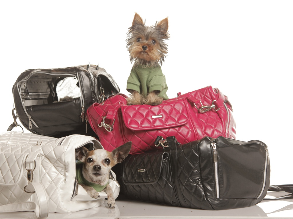 5 Ways To Make Travel Safer For You and Your Pet