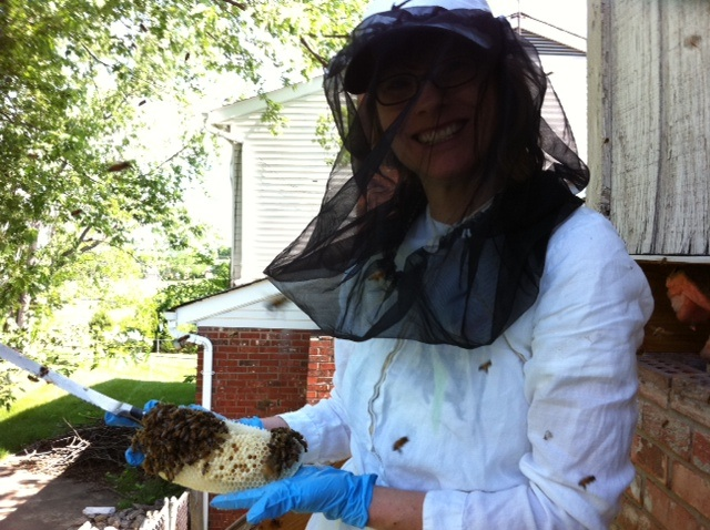 Professional Bee Removal Services - Hire Them To Remove Beehives From Garden And Home
