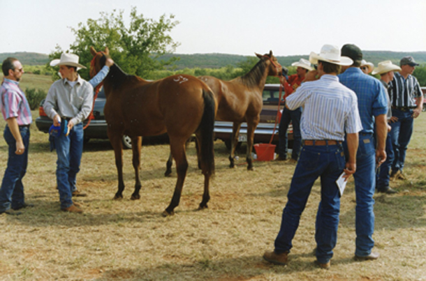 What To Consider When Buying A Horse