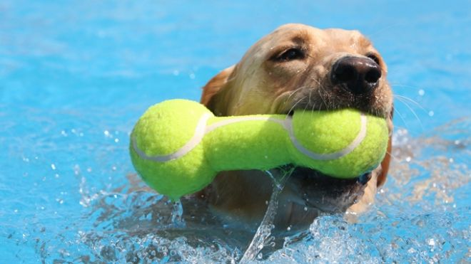 Getting The Most From Your Dog Toys
