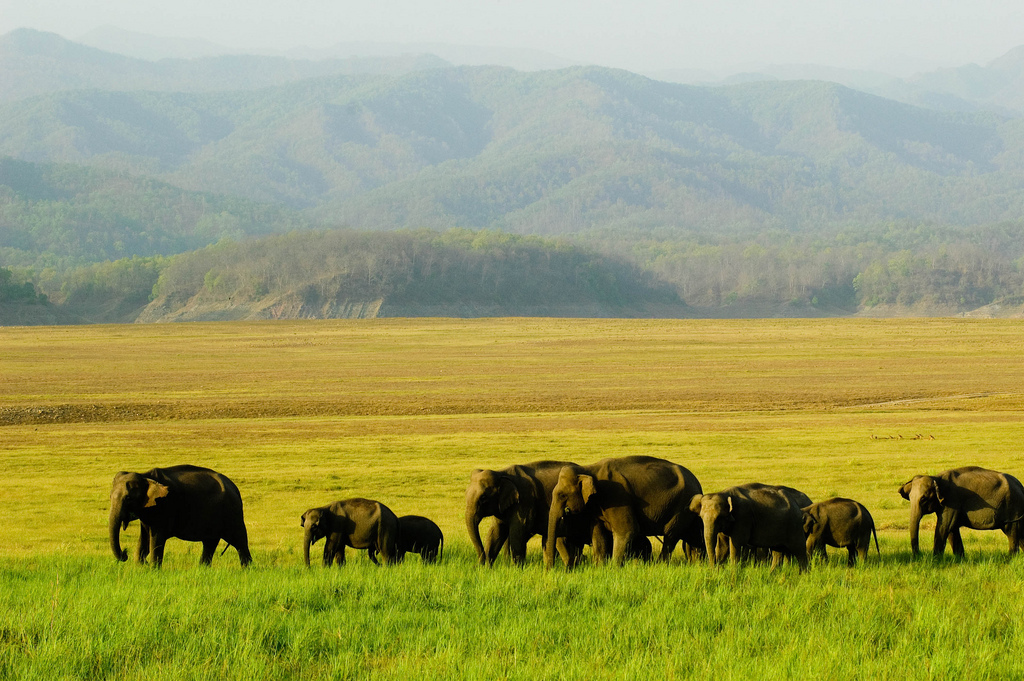 Visit One Of The Best National Parks Of India- Jim Corbett