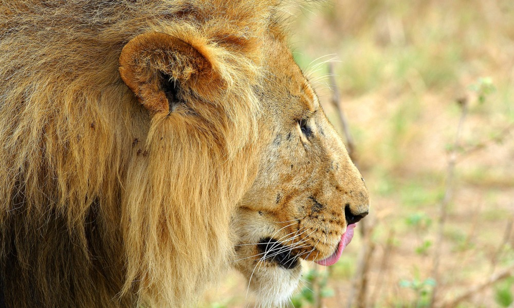 Wildlife and Wilderness in South Africa