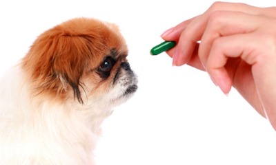 Helpful Tips On How To Buy Pet Meds