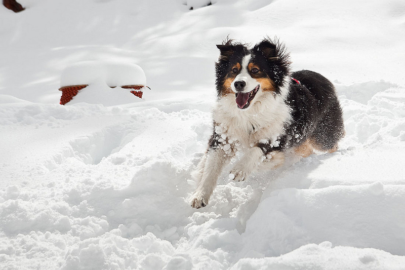 Winter Tips for Pets in Cold Weather-Because We Care