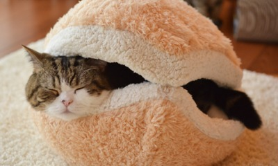 Train Your Cat To Love That Cat Bed