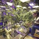Growing Weed Indoors With Assistance From This Specialist Is A Sheer Delight