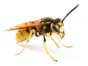 Effectiveness Of Cb D-Force Insecticide & Wasp Freeze Label Products