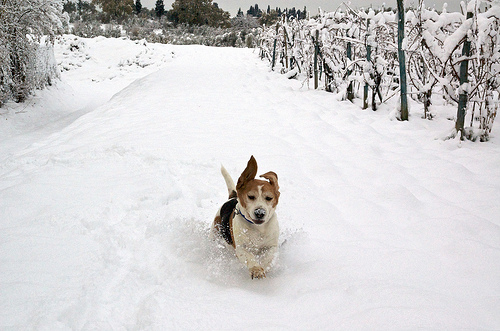 Winter Activities For Pets Fun Games For Dogs and Cats
