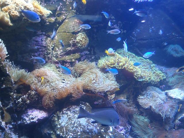 Diving Around Austraila