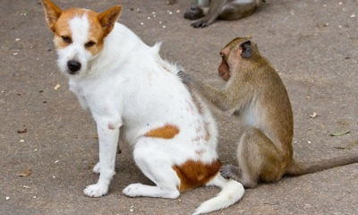 A Natural Way To Control Your Pet Cat Fleas