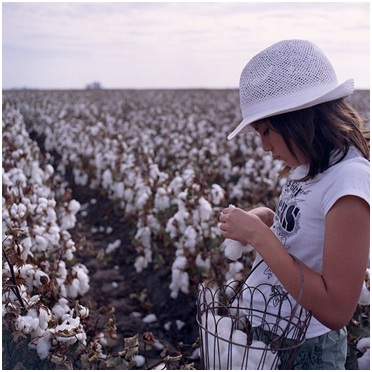 The Myth That Almost Took Down The Cotton Industry