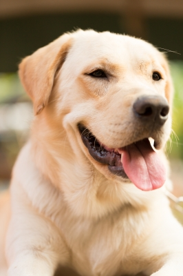 Choosing The Perfect Kennel For Your Dog