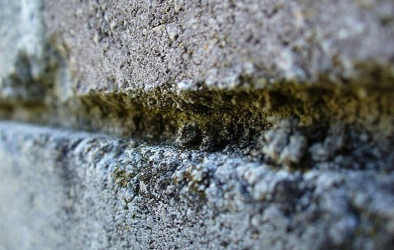Basic Guidelines For Mold and Mildew Removal