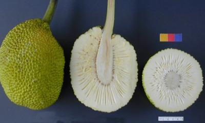 Top 6 Health Benefits Of Breadfruit