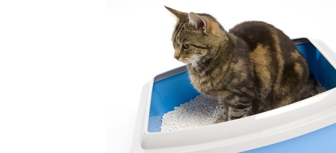 3 Crucial Aspects You Must Consider Before Picking A Healthy Cat Litter