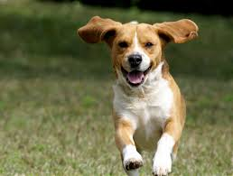 Choose From A Comprehensive List Of Dog Names Available Over The Internet When In Confusion