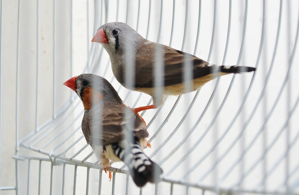 Tips For Tour Finch Bird Cages