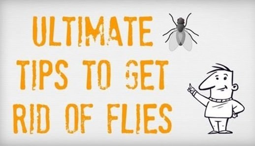 5 Ways To Fight Flies Naturally