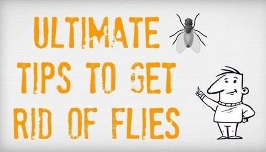 Fight Flies Naturally
