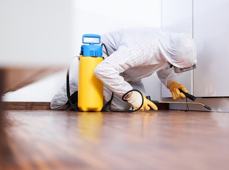 Get Finest Solutions For Your Pest Related Issues