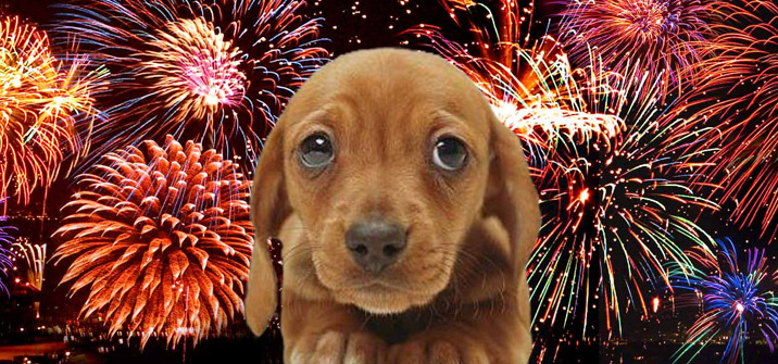 Take The Fear Out Of Fireworks For Your Pets