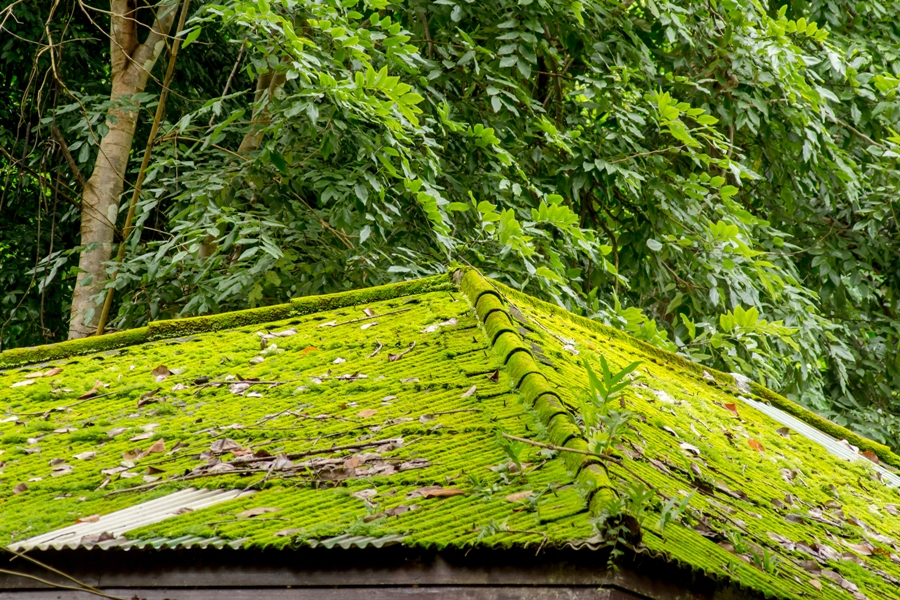 Things To Know About Roof Moss and Algae