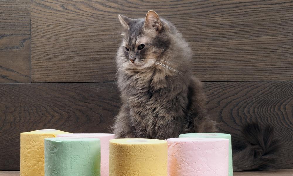 Why Do Cats Get Diarrhea?