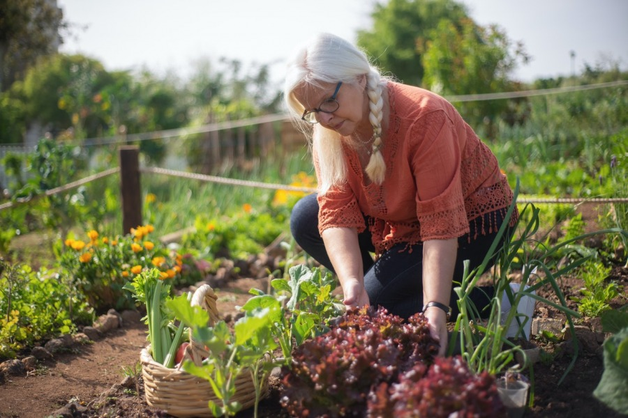 How to Increase Your Vegetable Garden Yield This Year